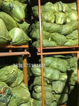 山东今日白菜价格白菜产地基地图片