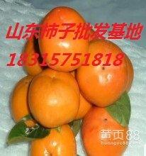 山东柿子批发价格,山东柿子产地。临沂柿子种植基地,日本甜柿批发价格图片
