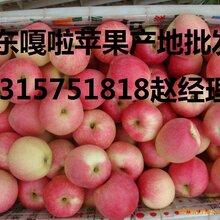 冷库红富士清仓处理75以上0.4毛