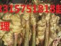 山东仔猪产地批发市场,三元仔猪价格30的多少钱一头图片
