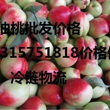 一带一路;山东大棚油桃产地批发价格。莒县油桃价格,油桃批发行图片