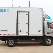 冷藏车厂家庆铃蓝牌排半冷藏车信息程力图片