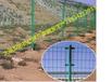 厂家供应太原双边丝护栏网包塑铁丝围栏公路双边丝框架护栏网定制