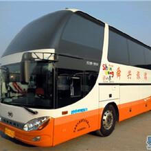 郑州到黄城大巴车至上诚信客运图片