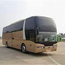186/2557/7917郑州到昌乐大巴长途卧铺车wp图片