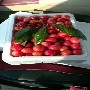 樱桃苗嫁接枣庄市福星提前成熟一个星期,图片