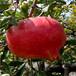 西固区皮亚勒玛甜石榴石榴苗当年结果