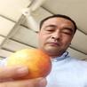 桃苗果实变色海西蒙古族藏族自治州中油4桃苗生长和发育的需要