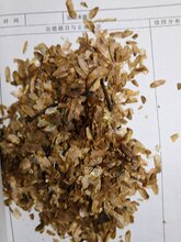 香椿種子怎么種植旺運苗木告訴你香椿種子提高發芽率圖片