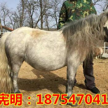 汗血马养马场一只马多少钱