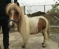 大型养马场小马多少钱一匹
