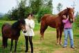 小矮马价格德保矮马价格马养殖场宠物小矮马价格