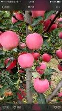 甘肃天水代收代办2元红富士苹果花牛苹果
