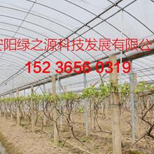 蔬菜大棚建设镀锌钢管大棚价格