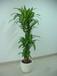上海绿化租摆,植物租赁,花卉租赁,花木租赁,花草租赁,植物出租