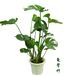 上海觀葉綠植租賃、花卉出租擺放、辦公室綠化綠、植租擺、綠植盆栽出租、綠植盆景租賃