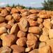 广东黄蜡石,黄蜡石景观石,园林石