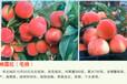 早熟桃苗有什么品种,桃树苗