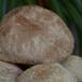 猴頭菇的家常做法猴頭菇營養價值