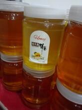 供应冬季枇杷蜜土蜂蜜纯天然农家自养蜂蜜保健品蜂蜜
