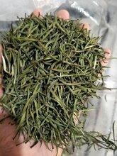 供應龍井茶恩施綠茶有什么好處?圖片