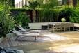 郑州专业屋顶绿化园林景观别墅庭院绿化设计施工