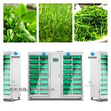 深圳全自动蔬菜催芽机芽苗机种植机旭众全自动芽苗机价格图片