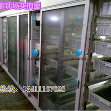 深圳做小麦芽苗的机械设备旭众XZM-100型芽苗菜机多少钱图片
