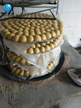 新一代全自动粘豆包机旭众多功能四头粘豆包机械设备四平大芸豆黏豆包机师傅上门图片