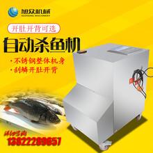广州商用新款全自动杀鱼机餐厅用开肚刮鳞杀鱼机多少钱图片