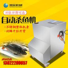 广州吃鱼连锁店用立式杀鱼机自动开背去鳞杀鱼机多少钱图片