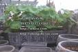 武漢景觀石風景石景石價格-武漢門牌石品種樣式