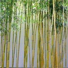 广西绿化竹子批发市场、桂林1公分2公分3公分绿化竹子质优价廉图片