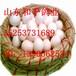 鸽子蛋近期价格上涨趋势