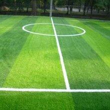 1公分围挡仿真塑料草坪(设计订做展示)图片