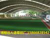 潍坊围挡挡墙专用绿植人工草皮