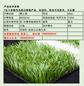 U型进口足球人造草坪专业定做