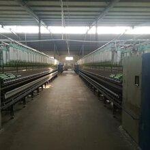 泰兴厂家生产仿大化涤纶纱线行情图片