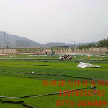 桂林足球场人造草,门球草,景观草厂家康力体育