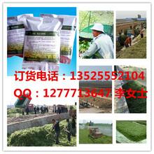 衡水秸秆草料养羊发酵剂出售草料秸秆如何养羊操作!