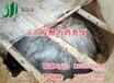 福建漳州鸡粪发酵剂哪买鸡粪如何发酵喂猪做饲料简单操作