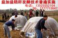 利用玉米秸秆发酵喂羊办法发酵玉米秸秆喂羊办法