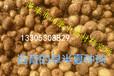 旱半夏种球,半夏种子,产量稳定,适宜人工种植用种