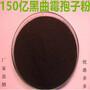 黑曲霉孢子粉在发酵饲料方面的应用图片