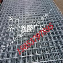低碳钢丝网片网片电镀锌丝网片价格