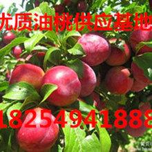 山东油桃基地今日油桃批发价格图片
