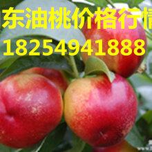 山东油桃基地近期油桃价格图片