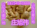 山东生姜基地大黄姜批发价格图片