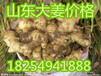山东鲜姜基地大黄姜批发价格