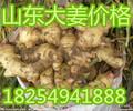 山东大黄姜.鲜姜产地
